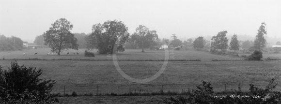 Fog on a Saanich Farm