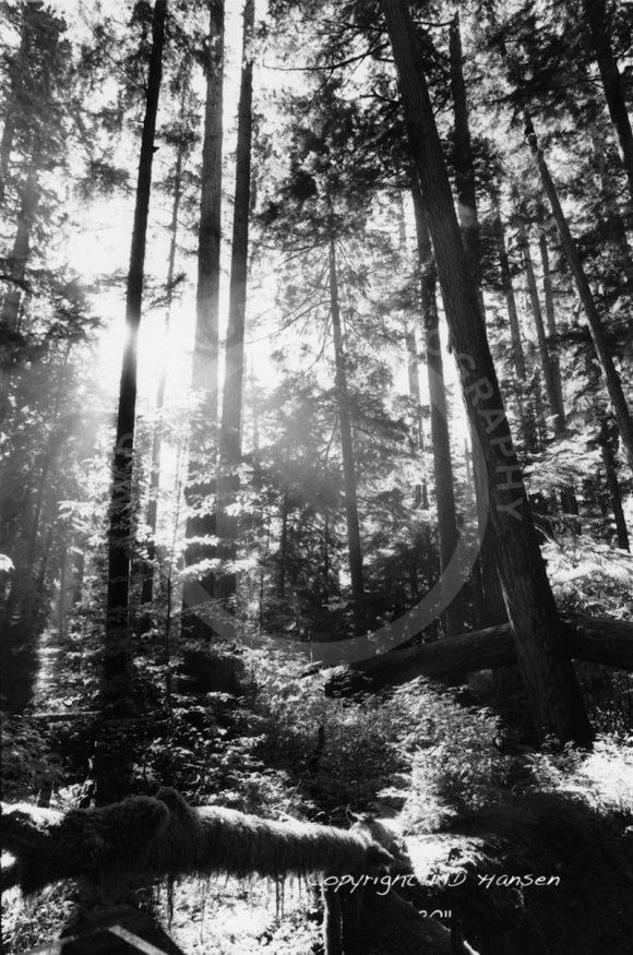 Sunlight in a Rainforest